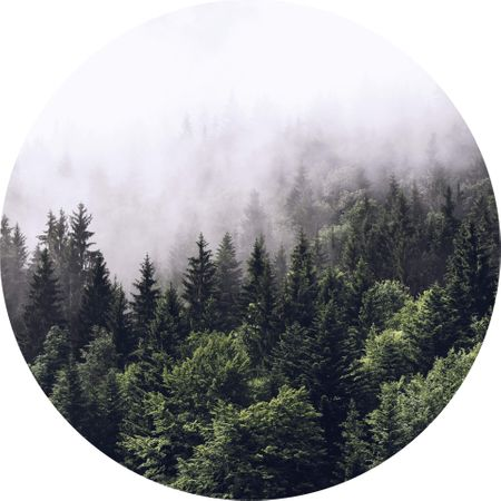 5433-R.jpeg