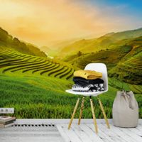 Terraced Rice Field in Vietnam - 5032