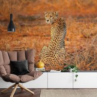 Leopard Safari - 5075