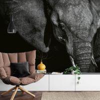 Beautiful Elephant - 5080