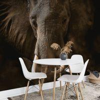 Elephant Ivory - 5083