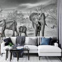 Elephant Family - 5096