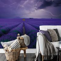 Field of Lavender - 5148