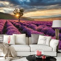 Lavender in the Provence - 5484