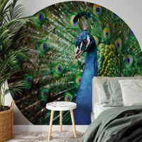 Beautiful Peacock -  5490